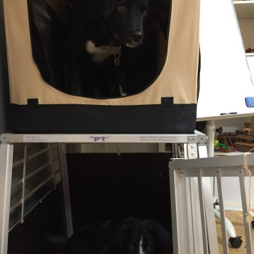Die Hunde in den Boxen