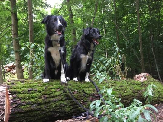 Wuschel und Lynn im Wald